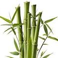 Bamboo Extract